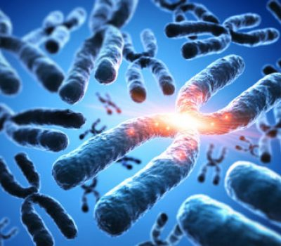 sciencedaily-dark-centers-of-chromosomes-reveal-ancient-dna
